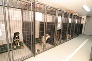 Welcome to Canine\'s Canyon - Services